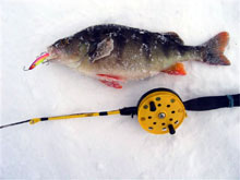 Недавно слышал жалобы и рыболова, у которого на балансир в кои-то веки клюнул крупный...