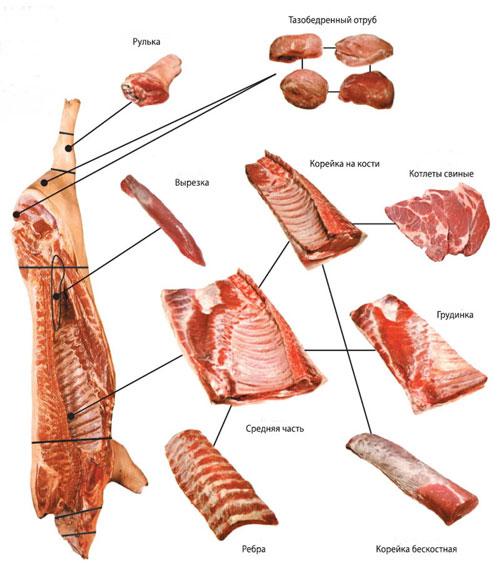 схема свиной туши