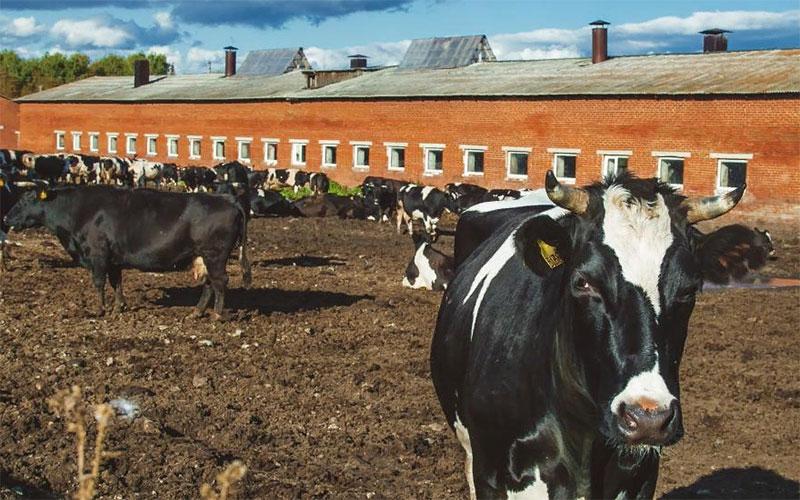Молочное животноводство Челябинской области в 2018 году
