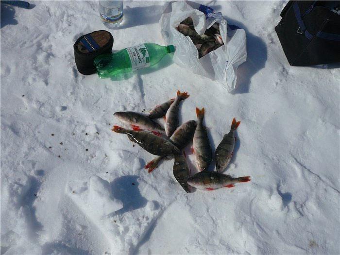 Челябинские озера черкаскуль ловить пелядь зимой