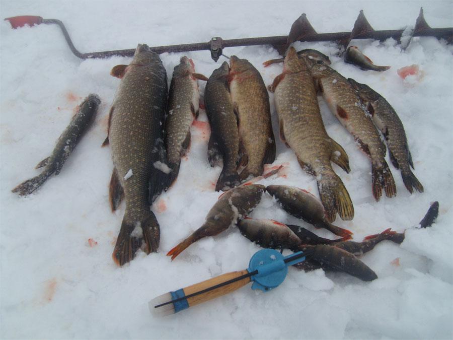 когда можно ловить рыбу в озере ильмень