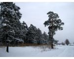Челябинский бор зимой (фото Куделенского Олега, Челябинск)