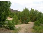 Карабаш, желтеющая листва в июле (фото редакции www.chelindustry.ru)