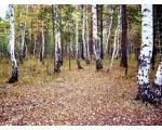Карталинский район. Осенний лес