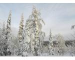 Зимняя природа Катав-Ивановска