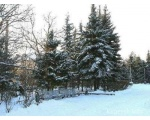 Городской парк зимой.