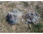 За лов китайскими сетями в озере Смолино браконьеры пошли под суд