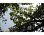 Памятник природы Дубовая роща
