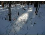Лес в районе озера Увильды (фото Лидии Пасюковой, г. Челябинск)