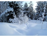 Зимний лес в окрестностях Чебаркуля