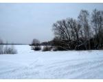 Шершни после снегопада (фото Олега Куделенского, Челябинск)