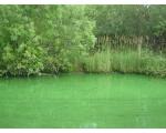 Шершневское вдхр. Цветение воды (фото Олега Куделенского, Челябинск)