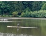 Серый журавль (фото picasaweb.google.com)