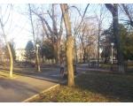 В скверах и парках Краснодара остатки зелени
